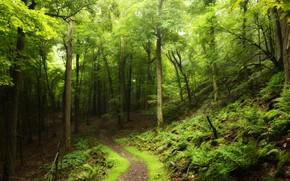 Картинка дорога, лес, лето, деревья, листва