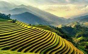 Картинка Green, Landscape, Rice fields