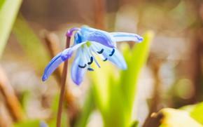Картинка цветы, природа, весна, крокус, растения nature photos, нежность лепестков
