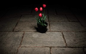 Картинка цветы, улица, тюльпаны