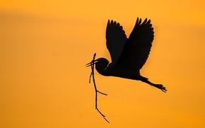 Картинка птица, крылья, силуэт