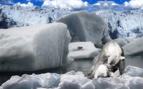 Картинка зима, облака, снег, поза, синева, рендеринг, лёд, ледник, медведь, медведи, льдины, медвежонок, белые, забота, мама, …
