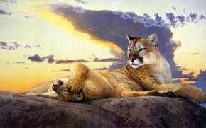 Картинка небо, взгляд, облака, закат, природа, поза, камни, отдых, рисунок, две, сон, картина, вечер, лапы, арт, …