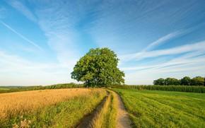 Картинка дорога, поле, пейзаж, природа, дерево, красота