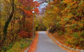 Картинка Дорога, Осень, Деревья, Fall, Листва, Autumn, Colors, Road, Trees, Leaves