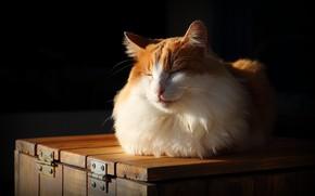 Картинка кошка, свет, уют