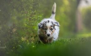 Картинка зелень, природа, собака, щенок