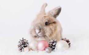Картинка шарики, снег, пушистый, кролик, белый фон, шишка, rabbit