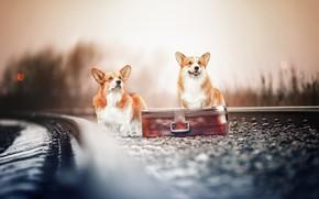 Картинка железная дорога, чемодан, парочка, боке, две собаки, Вельш-корги, Наталия Поникарова