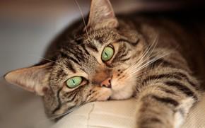 Картинка глаза, кот, усы, отдых