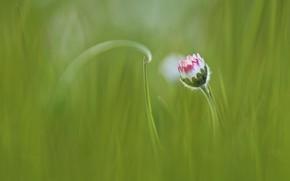 Картинка цветок, трава, grass, flower, Anna Zuidema
