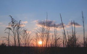 Картинка Небо, Растения, by Joanna Malinowska, Joanna Malinowska, Природа, Солнечный, Spring sunset, Растение, Nature, Сезон, Время …