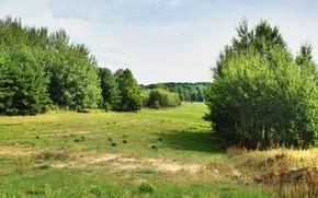 Картинка поле, лето, солнце, деревья