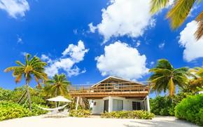 Картинка песок, зелень, небо, солнце, облака, дом, тропики, пальмы, гамак, кусты, лежаки, Карибское море, Caribbean Sea, …