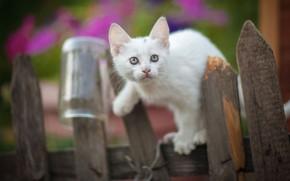 Картинка природа, животное, забор, банка, детёныш, котёнок, Юрий Коротун