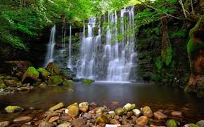 Картинка ветки, камни, скалы, водопад, весна, цветение