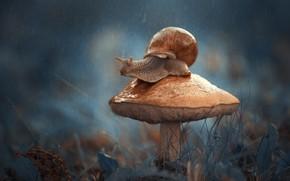 Обои макро, гриб, улитка