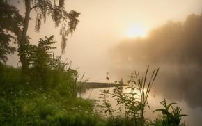 Картинка лето, трава, пейзаж, природа, туман, озеро, дерево, рассвет, птица, утро, цапля