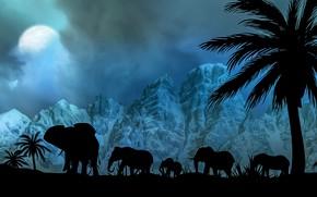 Картинка небо, горы, ночь, пальма, луна, слоны
