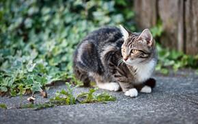 Картинка кошка, трава, котенок, двор, сидит