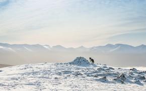 Картинка зима, снег, горы, собака, бордер-колли