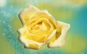 Картинка роза, текстура, Абстракция