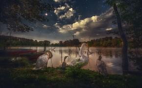 Картинка небо, деревья, птицы, ночь, озеро, звёзды, лебеди, птенцы