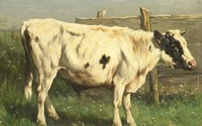 Картинка масло, картина, 1892, Йоханнес Хубертус Леонардус де Хаас, Молодой бык, Johannes Hubertus Leonardus de Haas