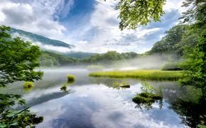 Картинка лес, туман, отражение, берег, утро, водоем