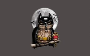 Картинка Sparrow, Луна, Illustration, Background, Art, Owl, Птица, Стиль, Арт, Robin, Minimalism, Style, Bird, Batman, Сова, …