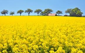 Картинка цветы, плантация, много, домики, голубое, цветущий, деревья, рапсовое поле, рапс, поле, луг, желтые, лето, небо, …