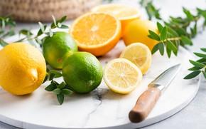 Картинка ветки, апельсины, нож, лайм, лимоны, цитрусовые