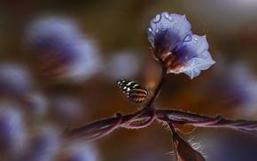 Картинка цветок, вода, капли, макро, природа, лист, бабочка, насекомое, Eleonora Di Primo