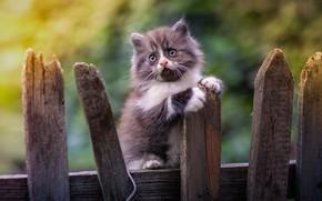 Картинка забор, малыш, котёнок, боке, Юрий Коротун