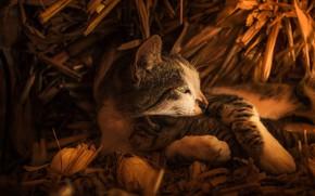 Картинка кошка, взгляд, морда, кошки, котенок, малыш, сено, профиль, мама, в обнимку