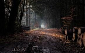Картинка дорога, лес, брёвна