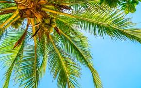 Картинка лето, небо, солнце, пальмы, summer, beach, paradise, palms, tropical