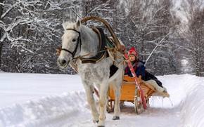 Картинка снег, лошадь, Зима, сани