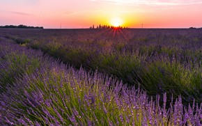 Картинка поле, лето, небо, солнце, свет, закат, цветы, природа, Франция, красота, вечер, много, лаванда, сиреневые, плантация, …