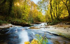 Картинка лес, поток, речка