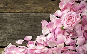 Картинка розы, лепестки, розовые, wood, pink, flowers, petals, roses