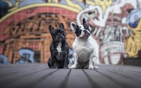 Картинка собаки, город, друзья
