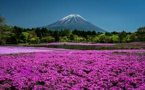 Картинка небо, солнце, деревья, цветы, пруд, парк, гора, Япония, Киото, флоксы