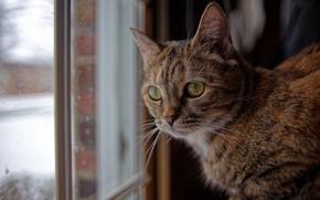 Картинка кошка, кот, взгляд, окно, мордочка, котейка