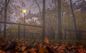 Картинка осень, деревья, туман, здания, дома, Швейцария, фонарь, Switzerland, опавшие листья, Виль, Wil