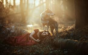 Картинка лес, девушка, свет, волк, собака, лежит, красное платье