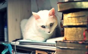 Картинка кошка, белый, кот, взгляд, морда, свет, дом, стол, фон, комната, книги, портрет, рабочий, прищепка, стопка, …