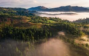 Картинка лес, горы, туман, холмы, даль, утро, ели, вид с высоты