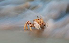 Картинка море, волны, желтый, фон, берег, краб, прибой, крабик, клешни