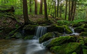 Картинка лес, солнце, деревья, река
